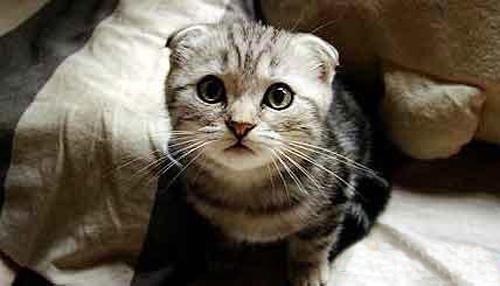 2007-10-01 | 两只小猫咪-刷新一下应该可以看到