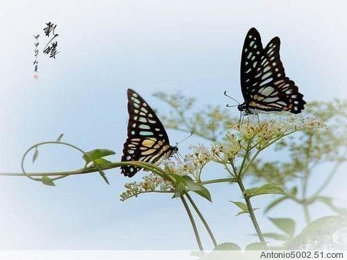 蝴蝶终飞不过沧海