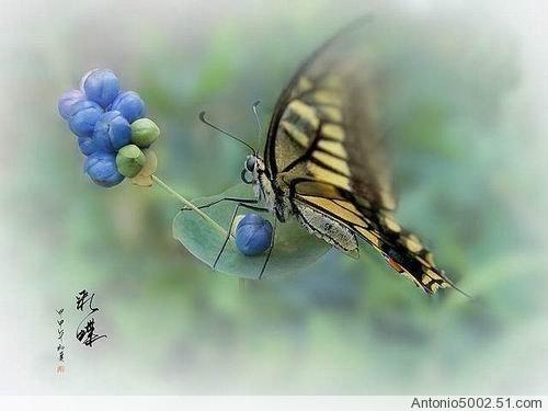 一张纸做出来的蝴蝶好像要飞了