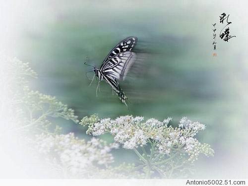 如何在ppt中插入会飞的蝴蝶