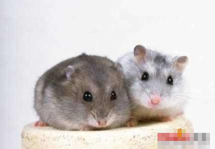 2008-3-11 | 超级可爱的小老鼠登场