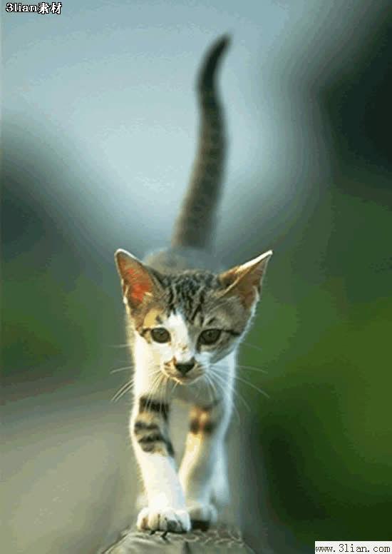 我认为猫是最可爱的动物