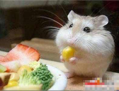 2008-03-14 | 超级可爱的小老鼠登场